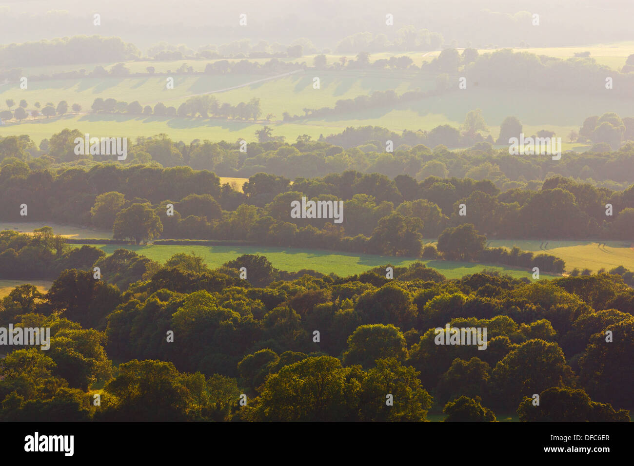 Late evening sunlight and haze looking above the treetops from Old Winchester Hill on the South Downs in Hampshire, UK. - Stock Image