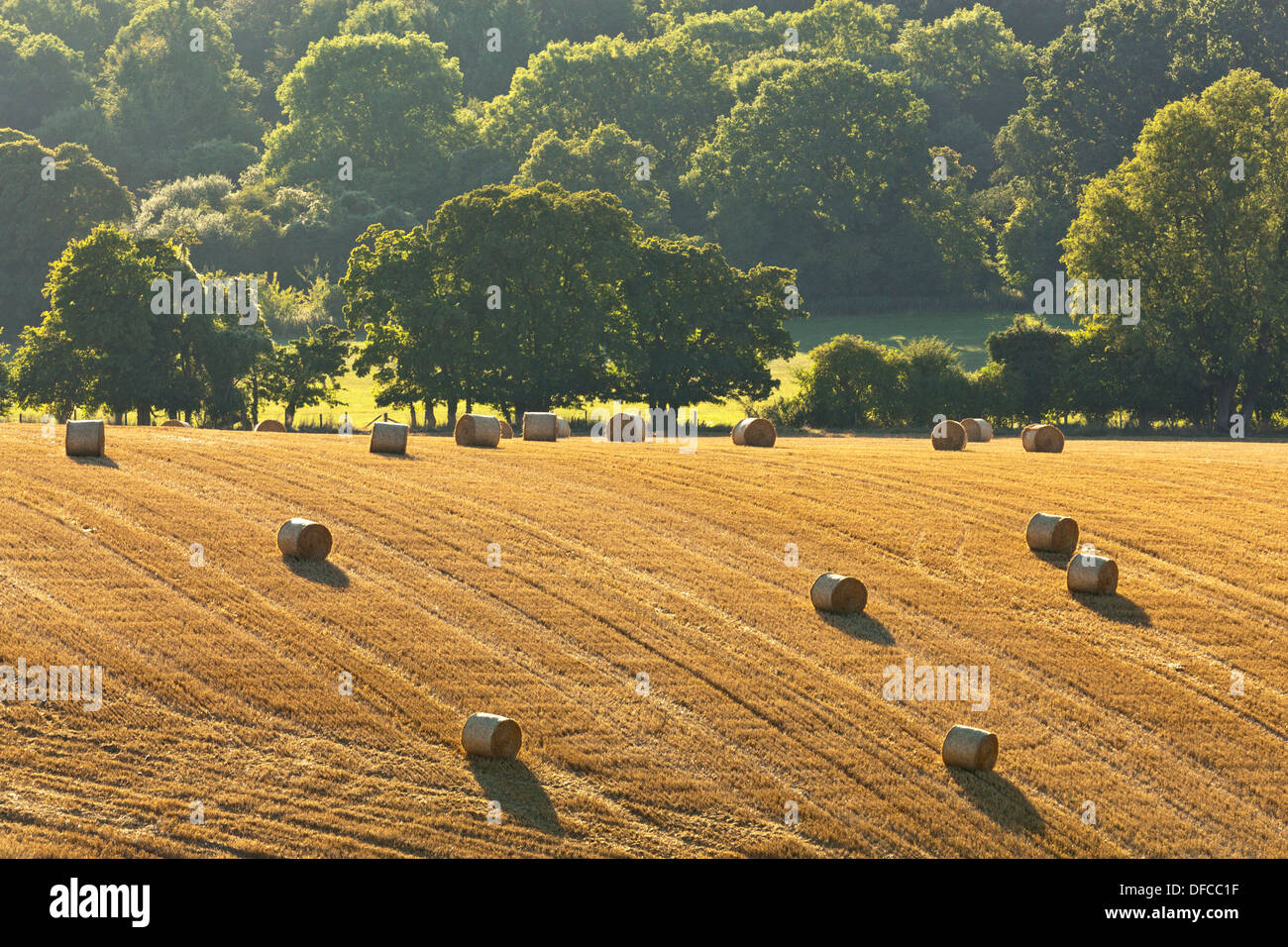 Image result for images of late summer evening in hampshire