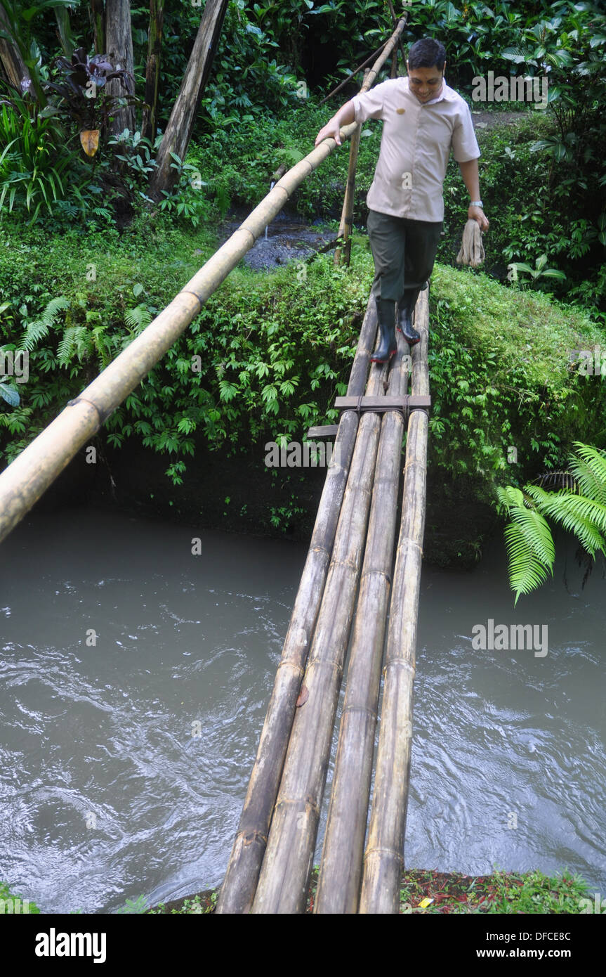 near Ubud (Bali, Indonesia): a man crossing a bamboo bridge over the Ayung river in the Ubud Hanging Gardens Hotel´s garden - Stock Image