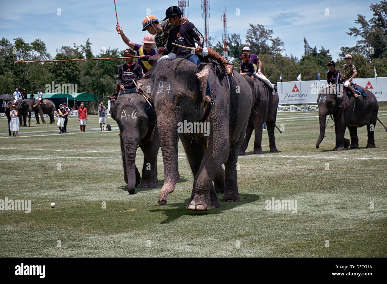 Elephant polo match action. 2013 Kings Cup Hua Hin Thailand S. E. Asia - Stock Image