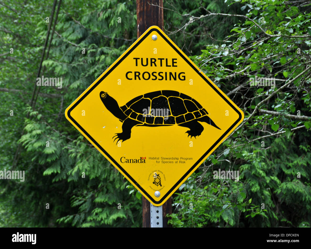 Slow Turtle Crossing >> Turtle Crossing Sign Stock Photo 61129677 Alamy