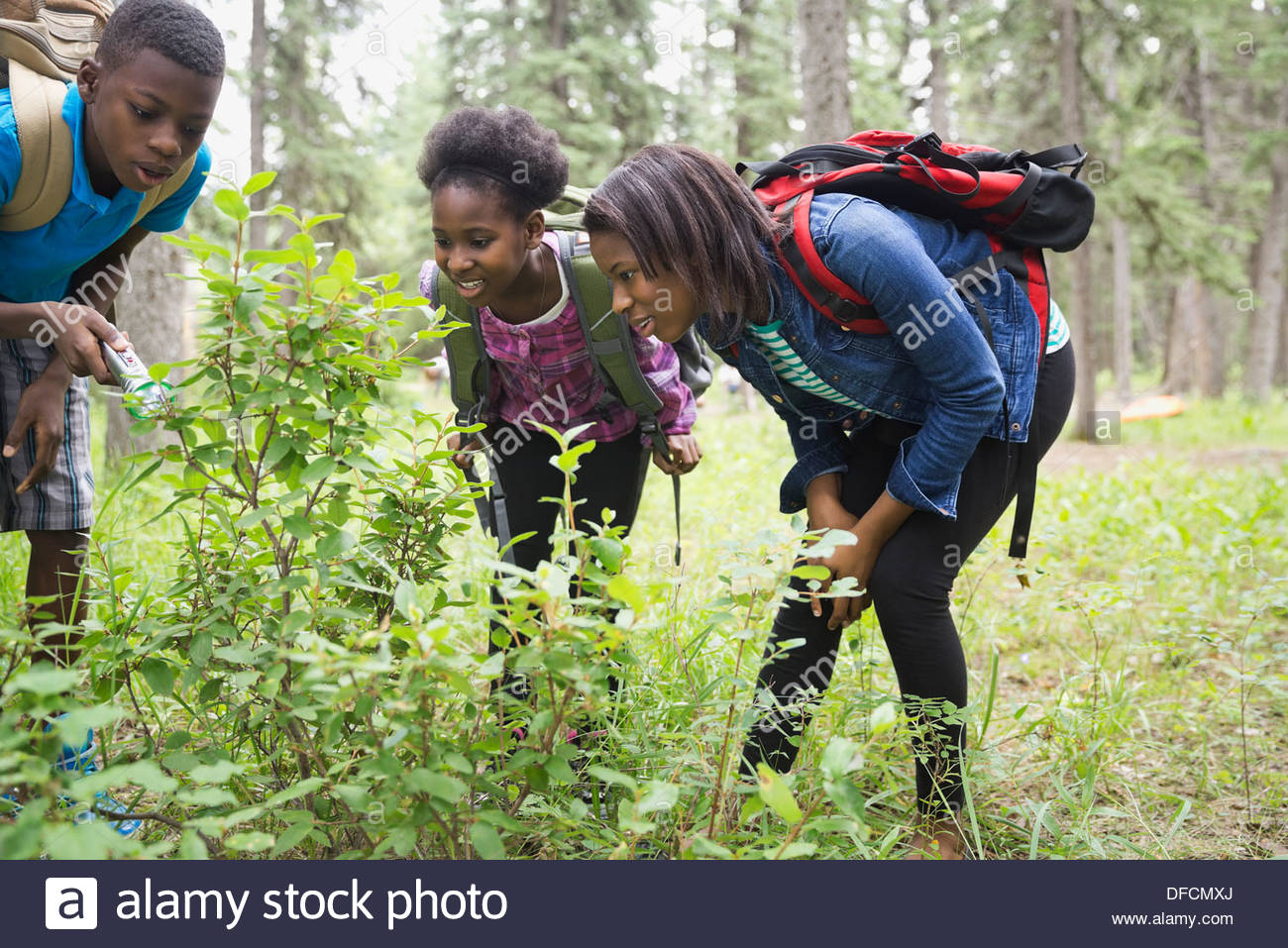 Sibling analyzing plants together in forest - Stock Image
