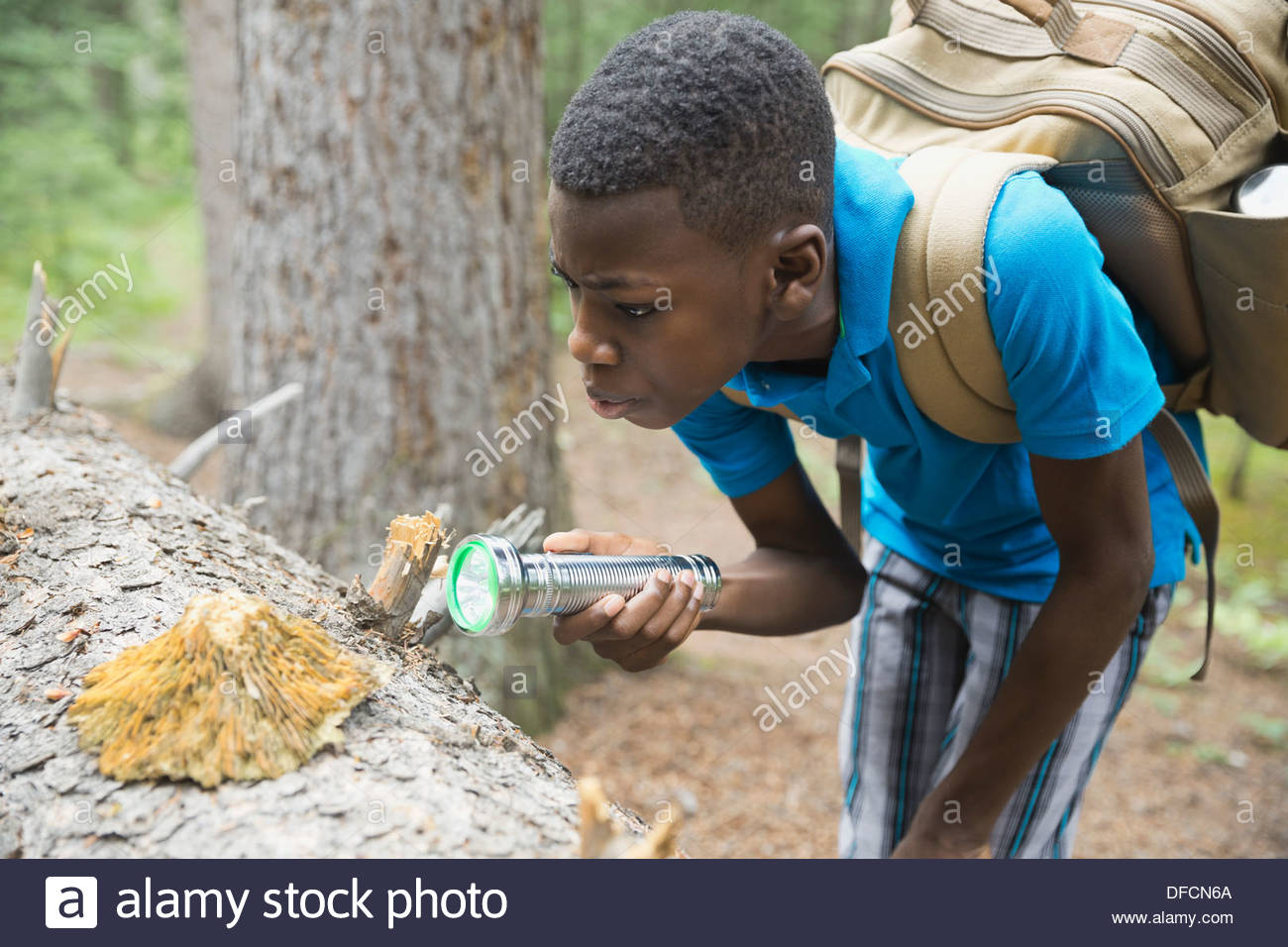 Boy examining fungus on tree trunk in forest Stock Photo