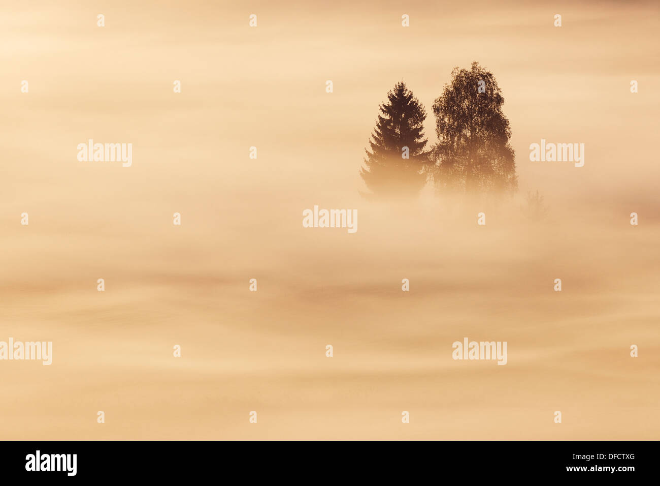 Germany, Bavaria, Morning mist above Kochelmoor - Stock Image