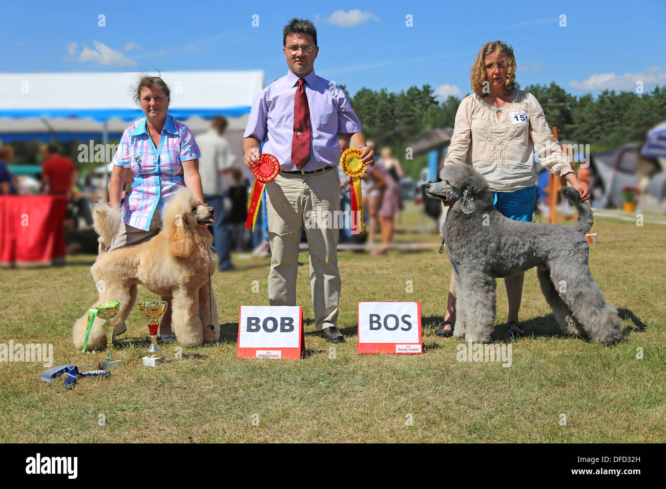 Dog Show - rewarding apricot and blue royal poodles - Stock Image