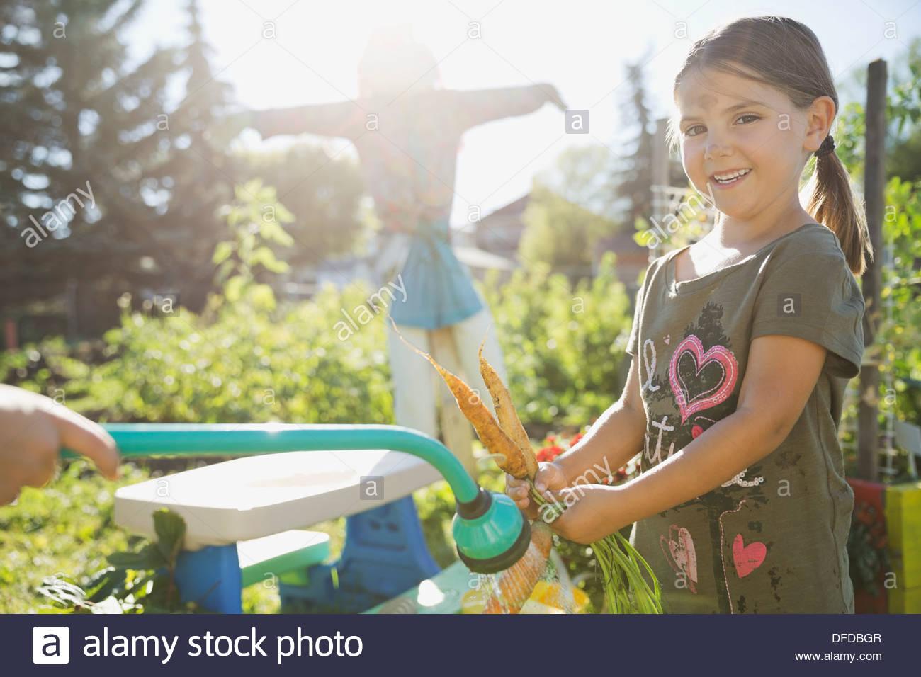Girl washing freshly harvested carrots with garden hose - Stock Image