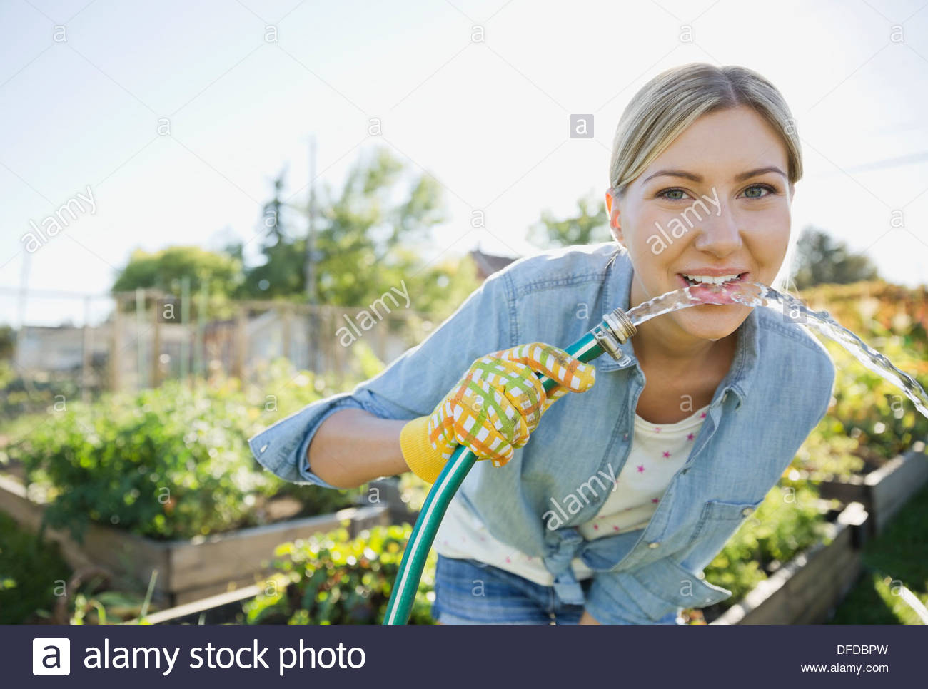 Woman bending over to drink water from garden hose  sc 1 st  Alamy & Woman bending over to drink water from garden hose Stock Photo ...