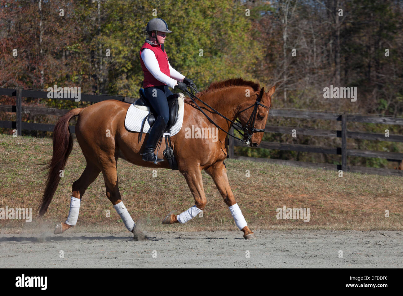 Woman riding dressage horse - Stock Image