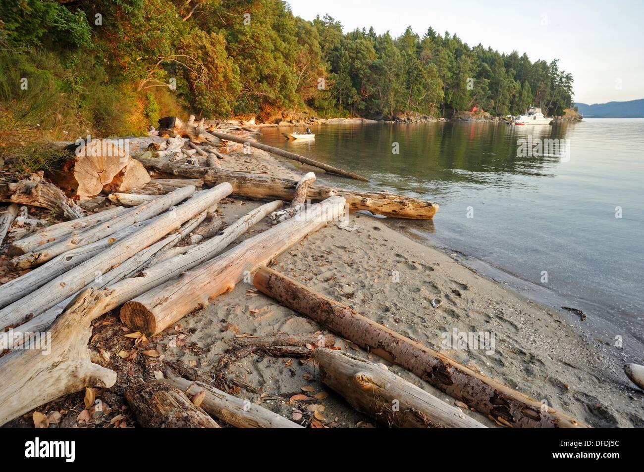 logs on beach Tent Island Gulf Islands British Columbia Canada & logs on beach Tent Island Gulf Islands British Columbia Canada ...