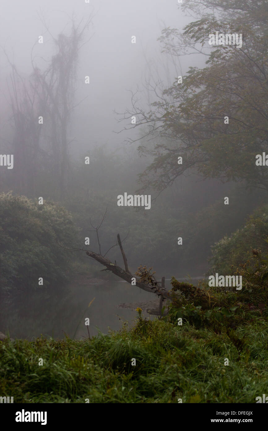 Foggy forest scene Stock Photo