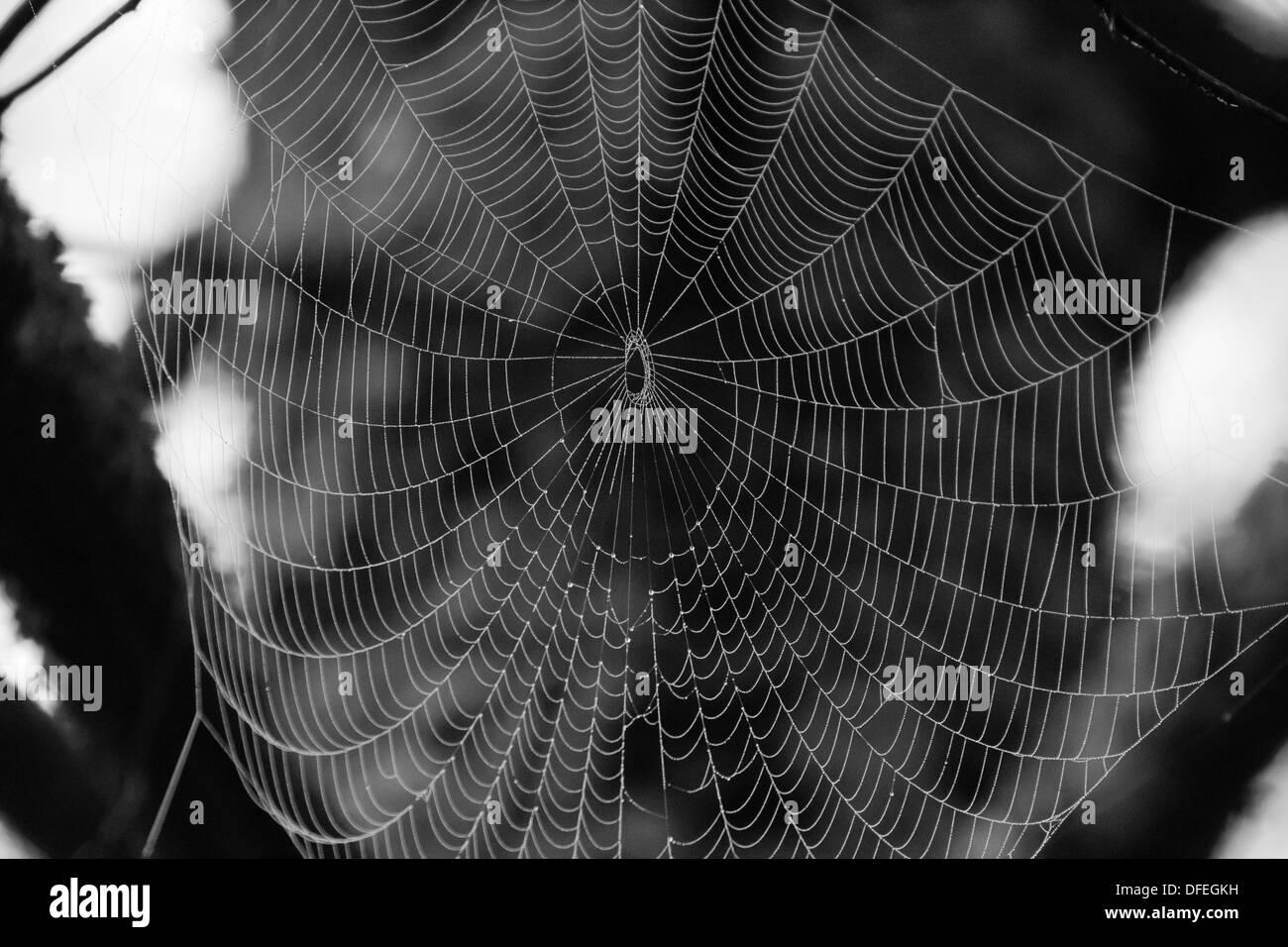 b&w silk spider web Stock Photo