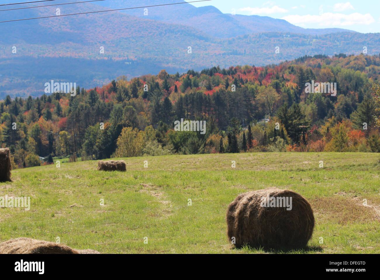 Circle bales of hay Stock Photo