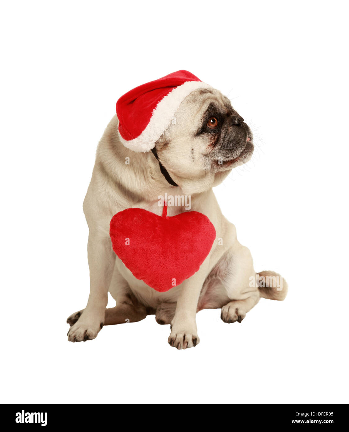 dog with hat and heart, exempted, white background, dressed as Santa Claus, cutout Stock Photo
