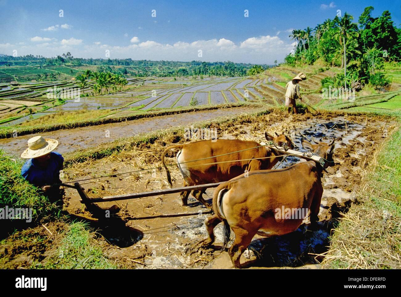 In the rice fields Stock Photo