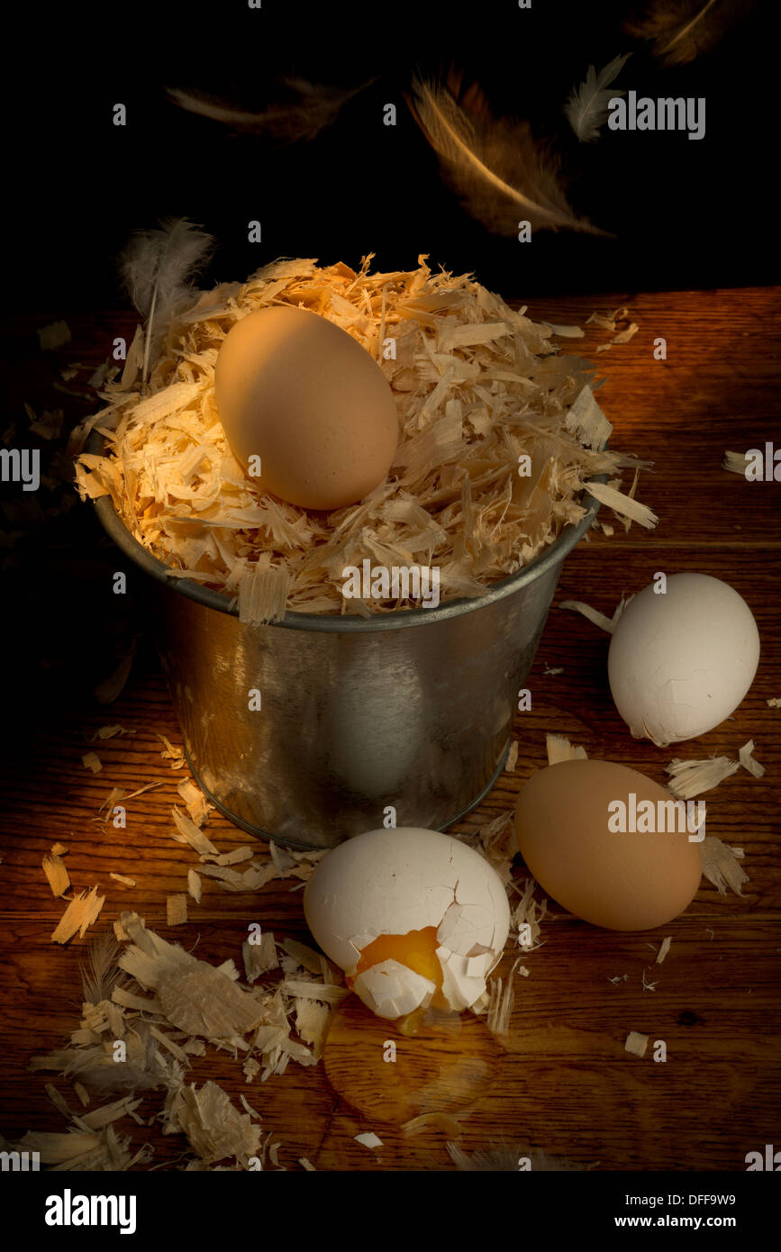 Nest disturbed - Stock Image