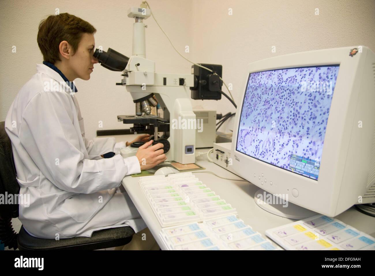 Microscopy and cells image, Laboratory of Pathological anatomy, Departamento de Producción y Sanidad Animal, Neiker Stock Photo