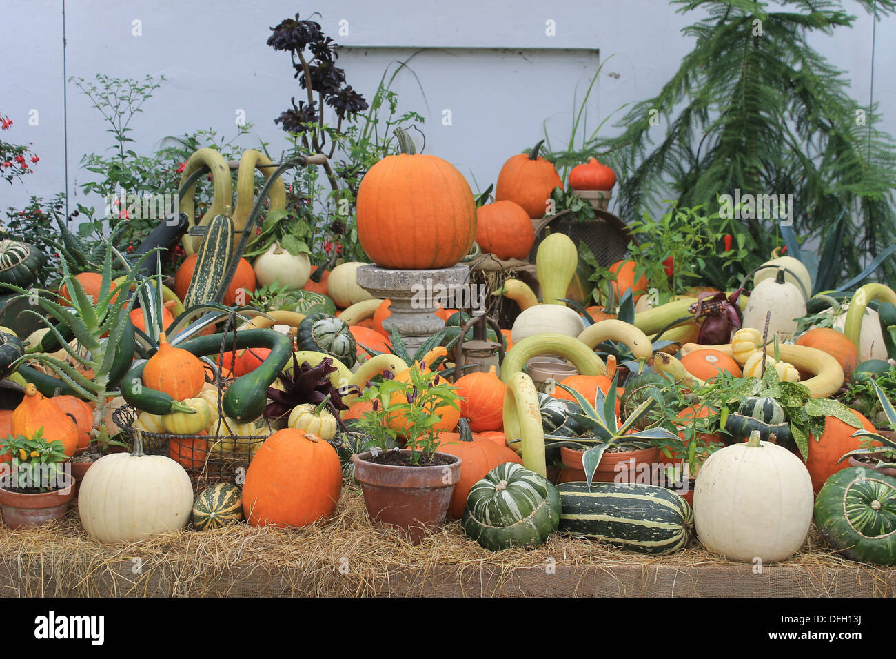 Display of harvest festival produce - pumpkins, marrows and squashes at Wimpole Hall, Cambridgeshire, UK - Stock Image
