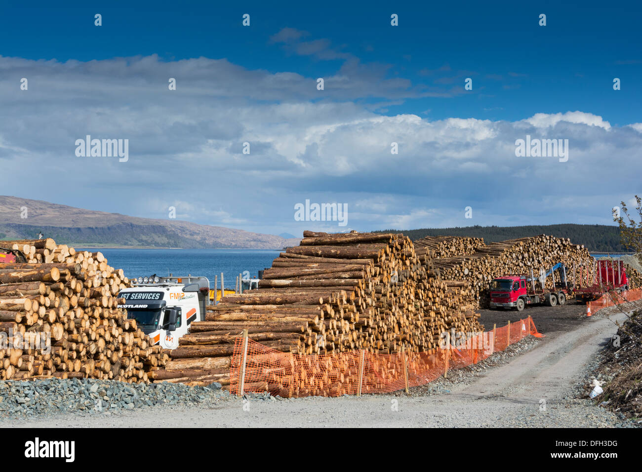 Softwood coniferous timber ready for transport to mainland, Isle of Mull, Inner hebrides. - Stock Image