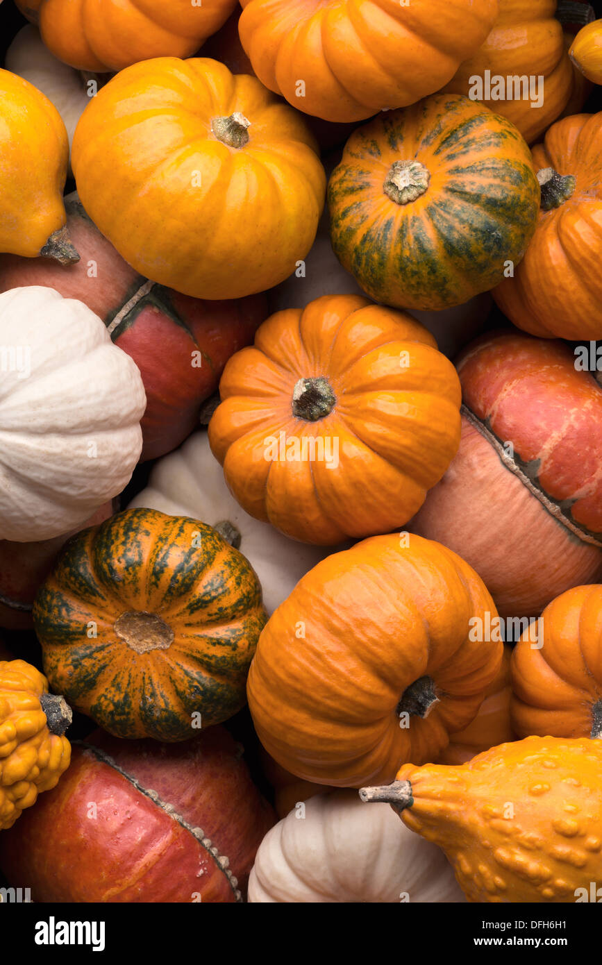 Backgrounds and textures: a lot of multicolor pumpkins, seasonal autumn decorative background Stock Photo