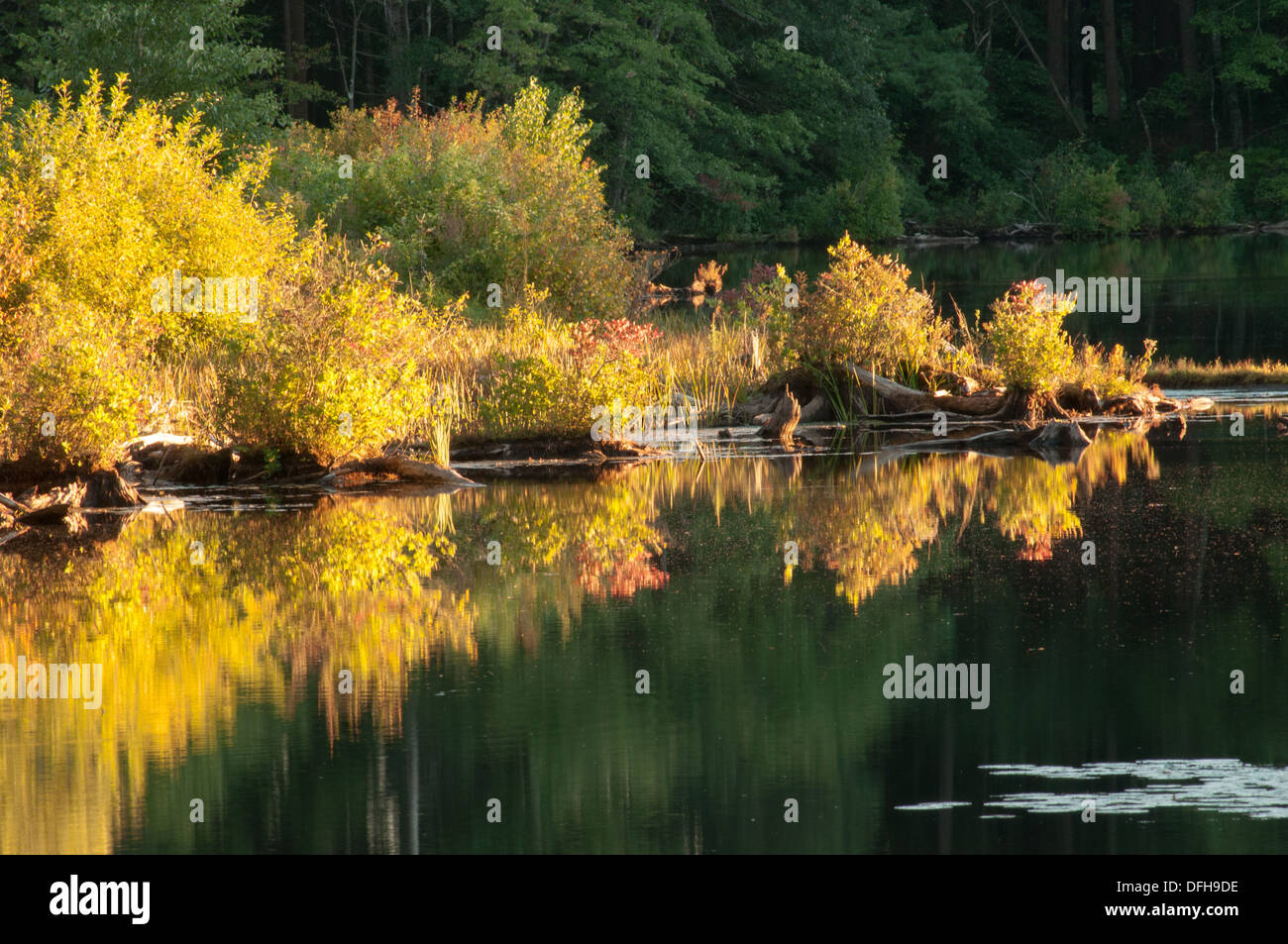 Pond with fall colors in Andover, Massachusetts - Stock Image
