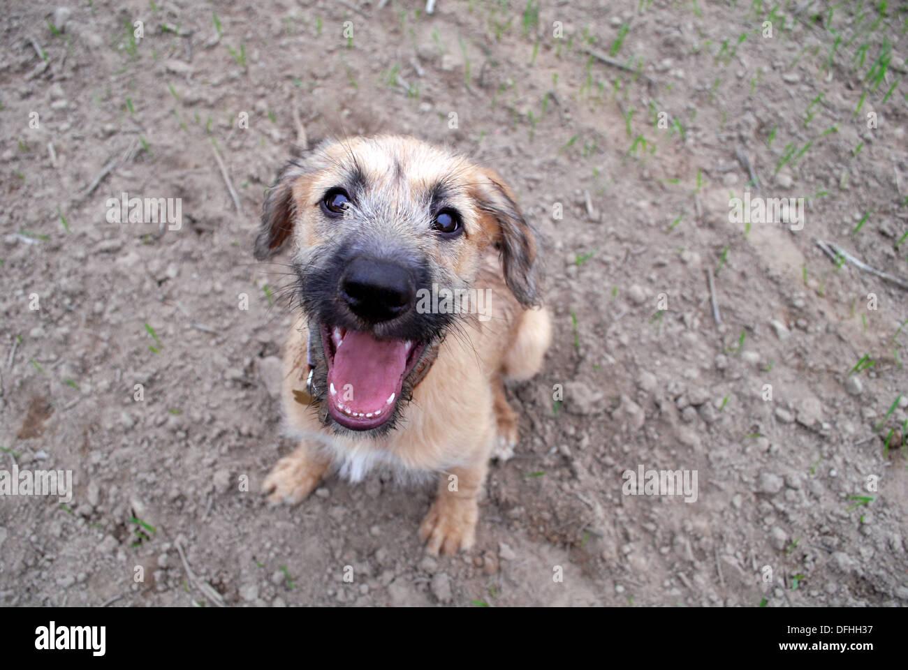 Mischievous puppies maiden walk - Stock Image