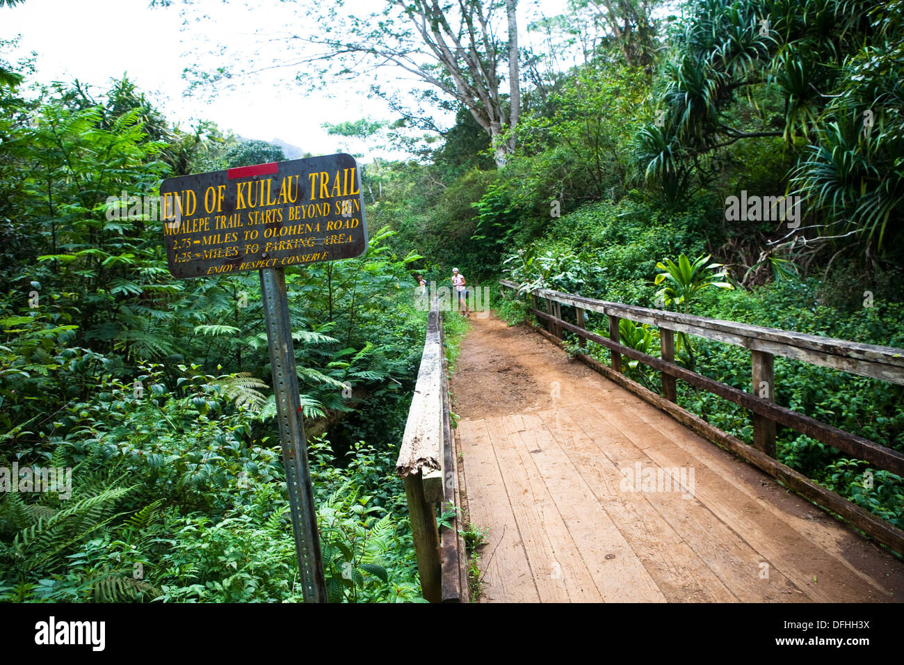 Merging of trails, the Kuilau and Moalepe trail begin near Wailua´s Keahua Arboretum and travels up to views of Mt. Waialeale - Stock Image