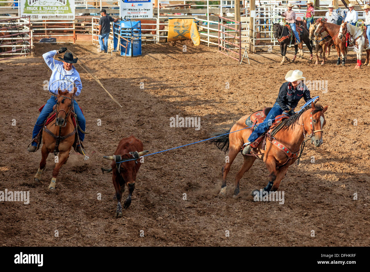 Cowboy Roping While Riding Stock Photos Amp Cowboy Roping