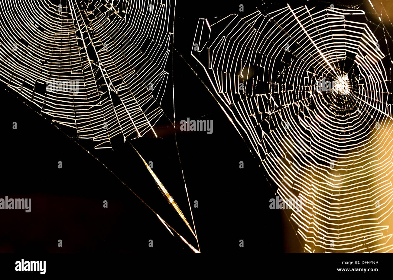 Spiders Webs at Night - Stock Image