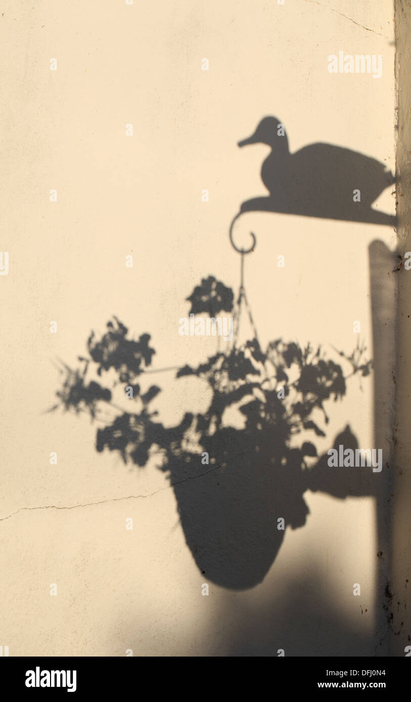 Hanging Flower Baskets Stock Photos Amp Hanging Flower