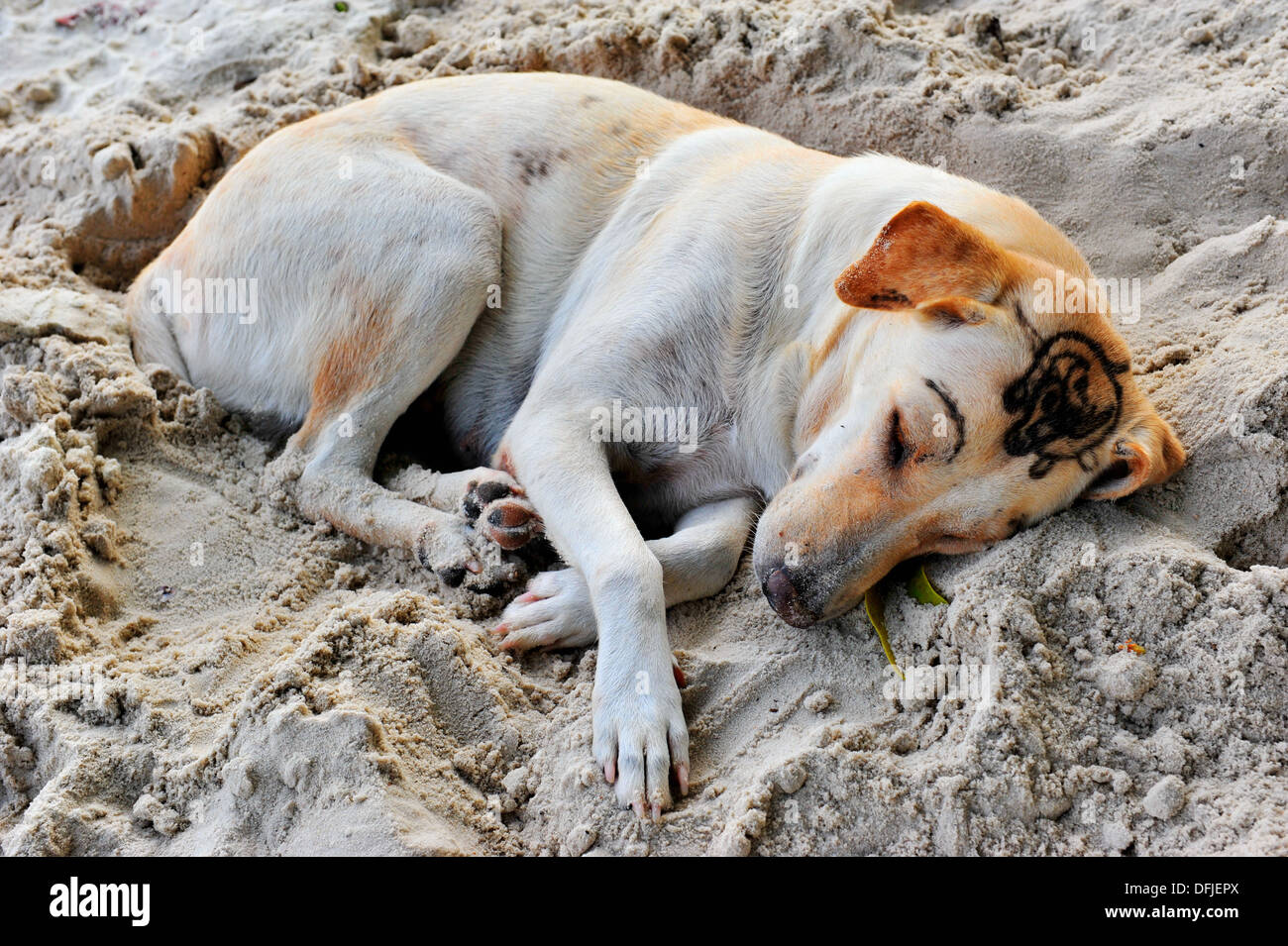 Thailand's islands & beaches - A dog with tattoo eyebrows sleeping on Sai Kaew beach (Koh Samet, Thailand) Stock Photo
