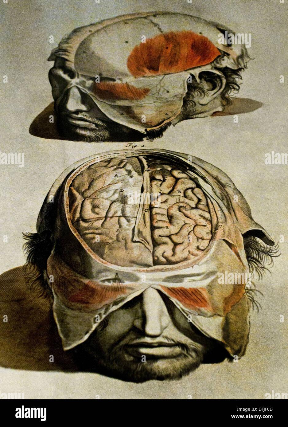 De Re Anatomica Libri XV 1559 ( Open Skull ) Museum Painting Venice Italy Italian Stock Photo