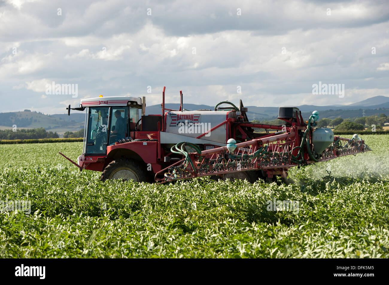 Spraying potoato crop with self propelled sprayer. Scotland. - Stock Image