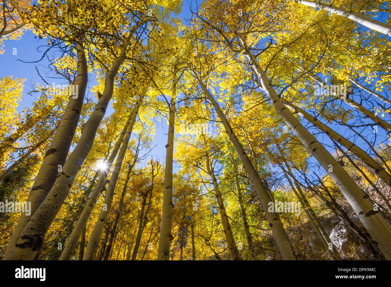 Fall color near Guanella Pass, Colorado. - Stock Image