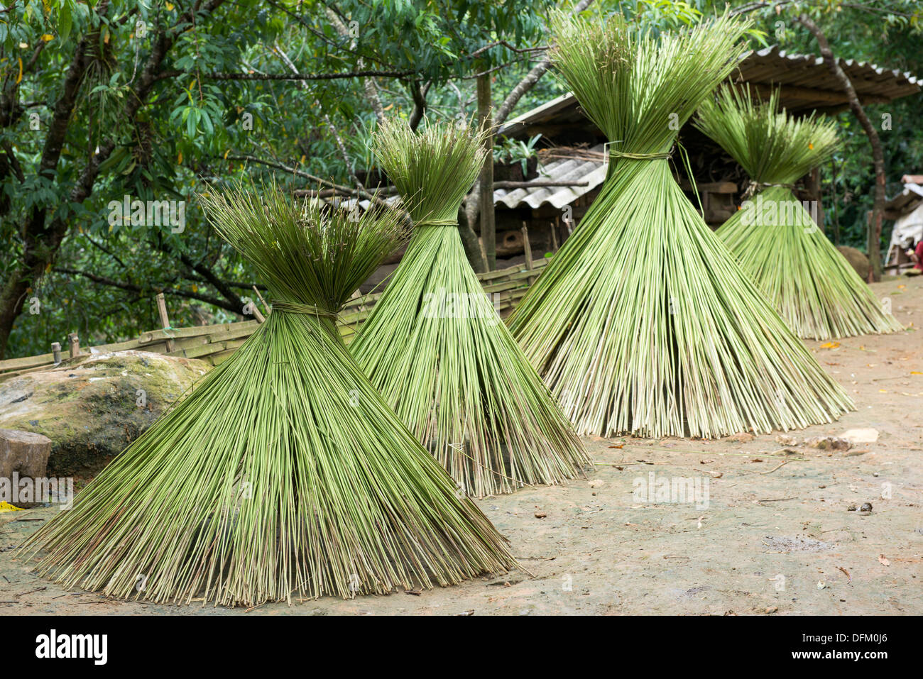 Minority group cultivate hemp for made traditional cloth, now drying on the back yard in the house, Sa Pa, Vietnam - Stock Image