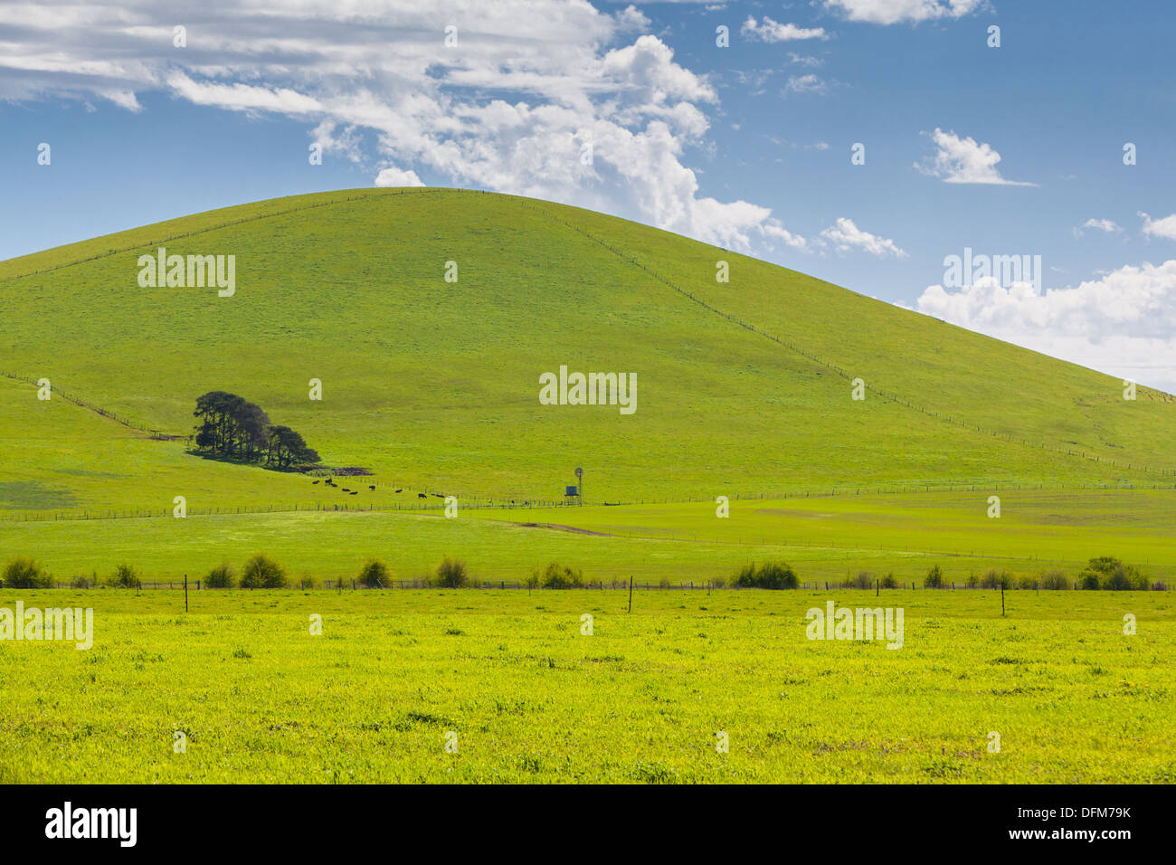 A hill near Creswick shines on a spring day near Creswick in the Victorian goldfields, Australia - Stock Image