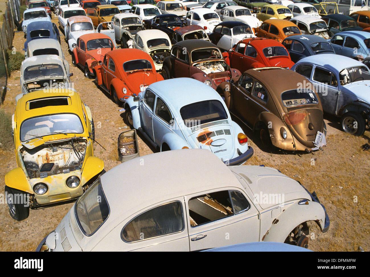 Old Volkswagens at car scrapyard - Stock Image
