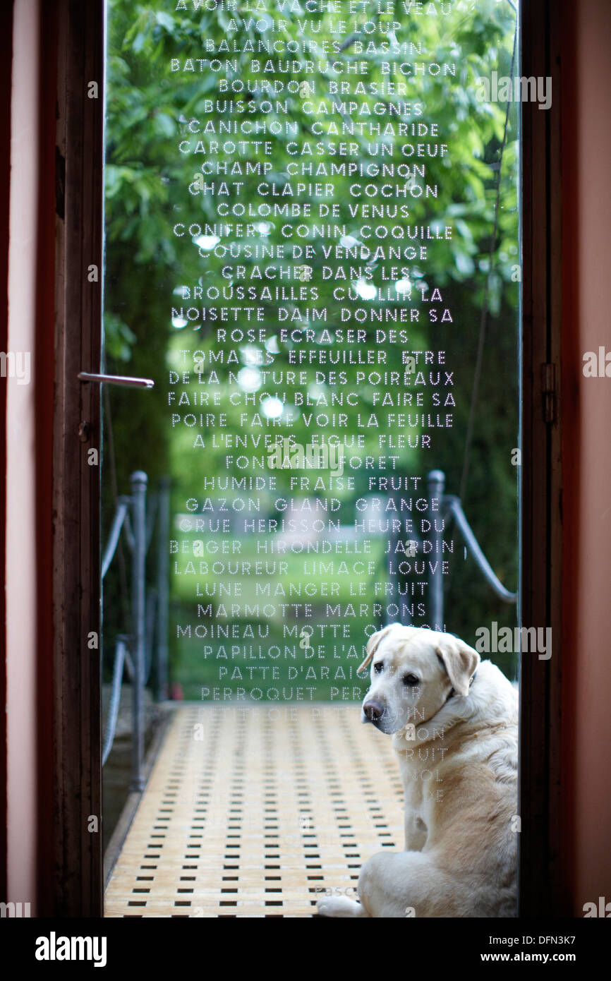 Chambre Humide Que Faire dog in front of engraved glass door, b and b chambre avec