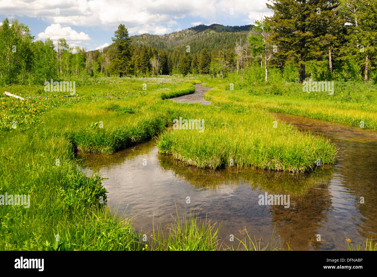 Curved creek forms loop and flows through green meadow - Stock Image