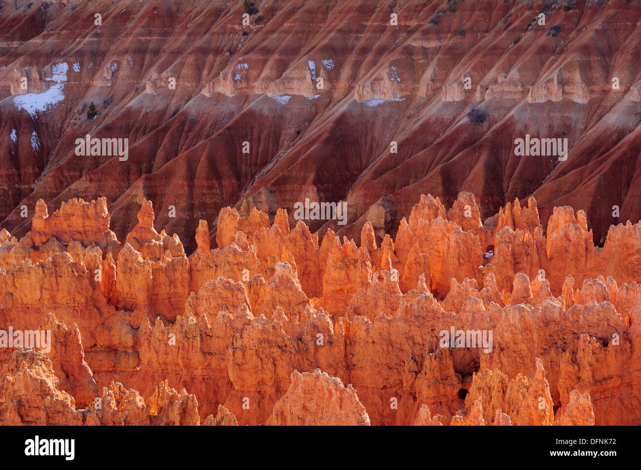 Rock spires in Bryce Canyon, Bryce Canyon National Park, Utah, Southwest, USA, America - Stock Image