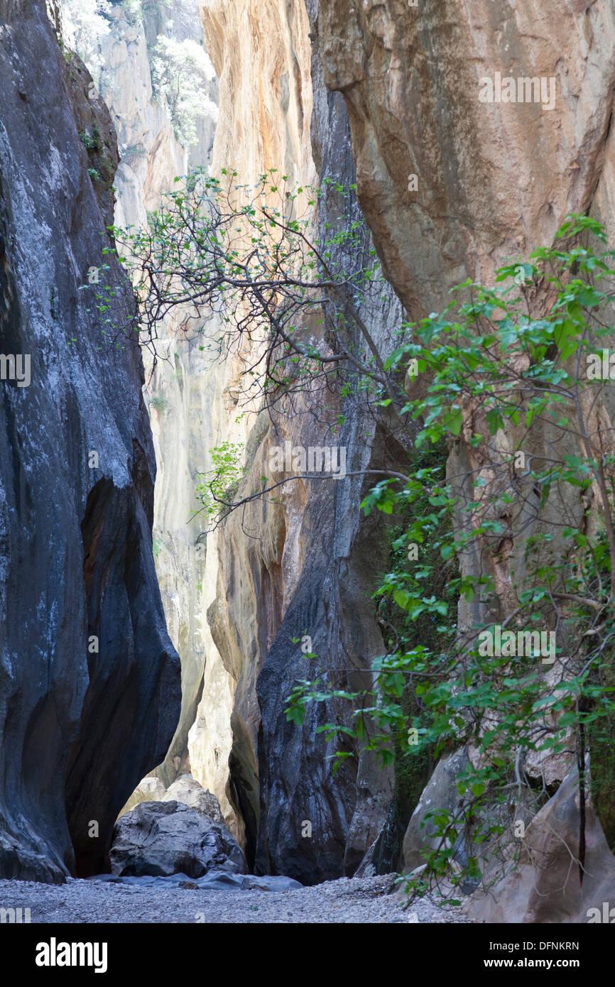 Hiking, canyon Torrent de Pareis, Cala de Sa Calobra, Serra de Tramuntana, UNESCO Weltnaturerbe, Mallorca, Spain - Stock Image