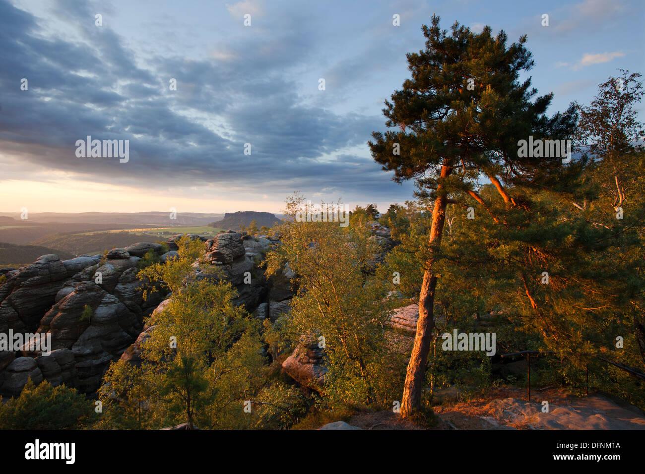 Pine tree at Pfaffenstein Rock in the evening light, view onto Lilienstein Rock, National Park Saxon Switzerland, Elbe Sandstone - Stock Image