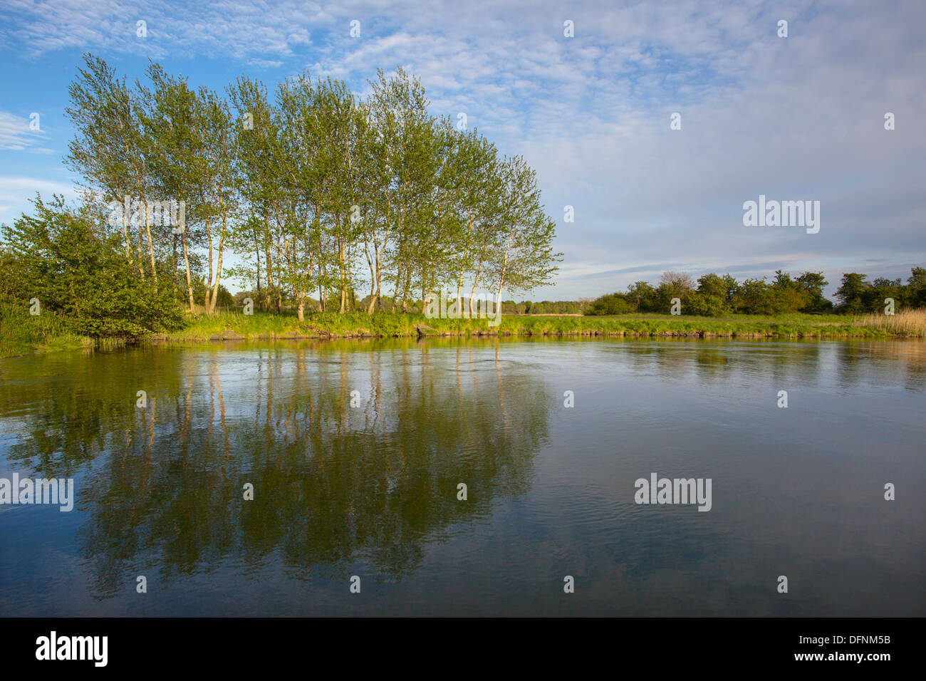 Landscape protection area Haddebyer Noor under clouded sky, Schlei fjord, Baltic Sea, Schleswig-Holstein, Germany, Stock Photo