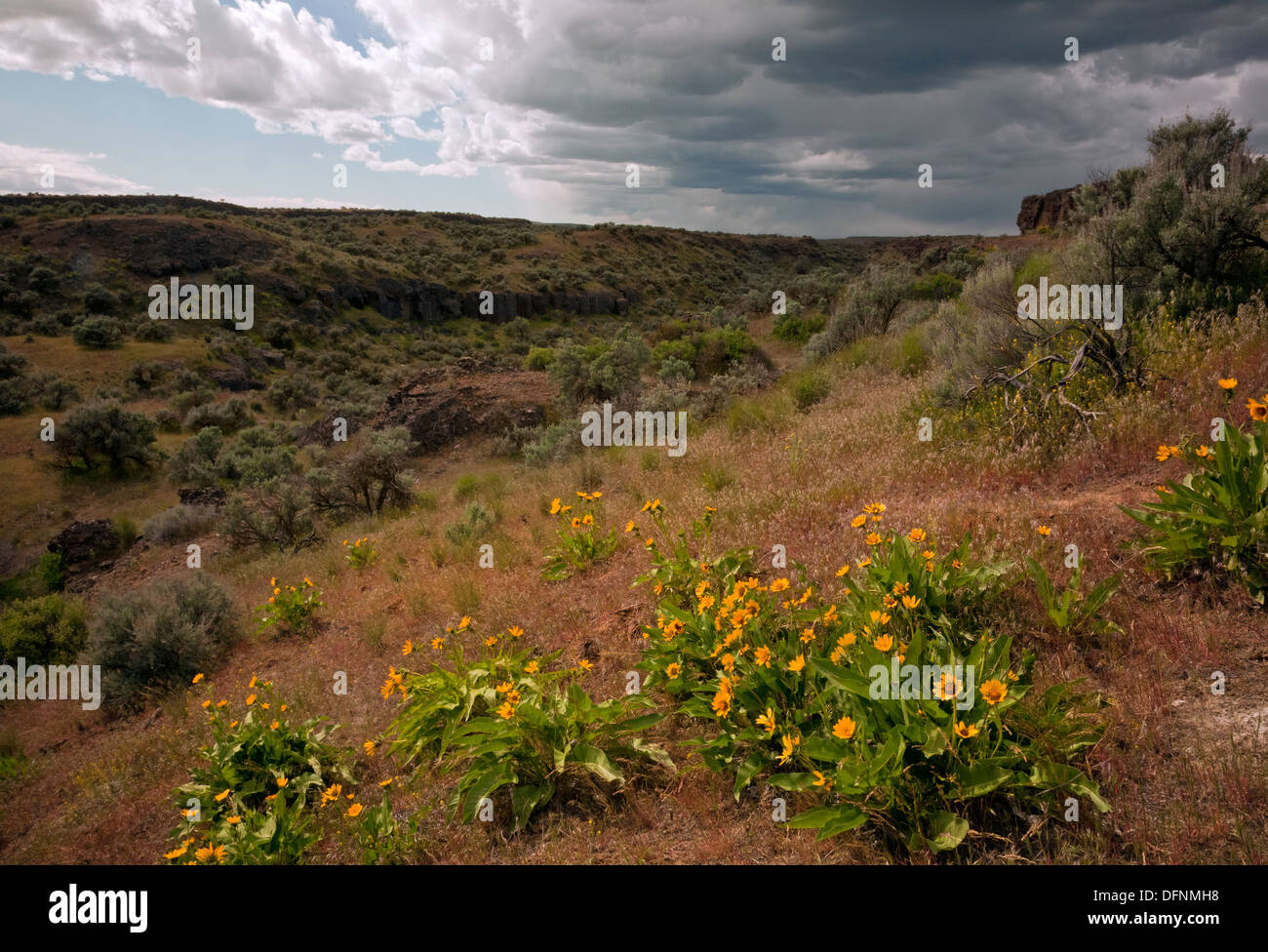 WASHINGTON - Storm coming over the prairie along the Frog Lake Trail in the Columbia National Wildlife Area. - Stock Image