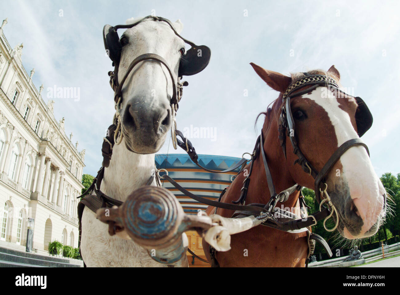 Coach-horses in front of the palace ´Herrenchiemsee´. Built by king Ludwig II of Bavaria. Island Herreninsel. Chiemsee. - Stock Image