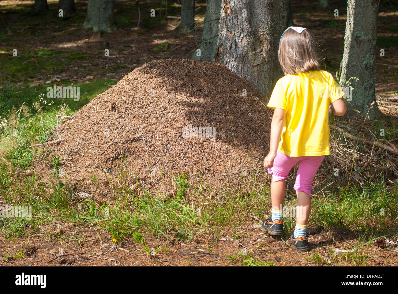 ant colony, Sumava Mts., Czech Republic - Stock Image