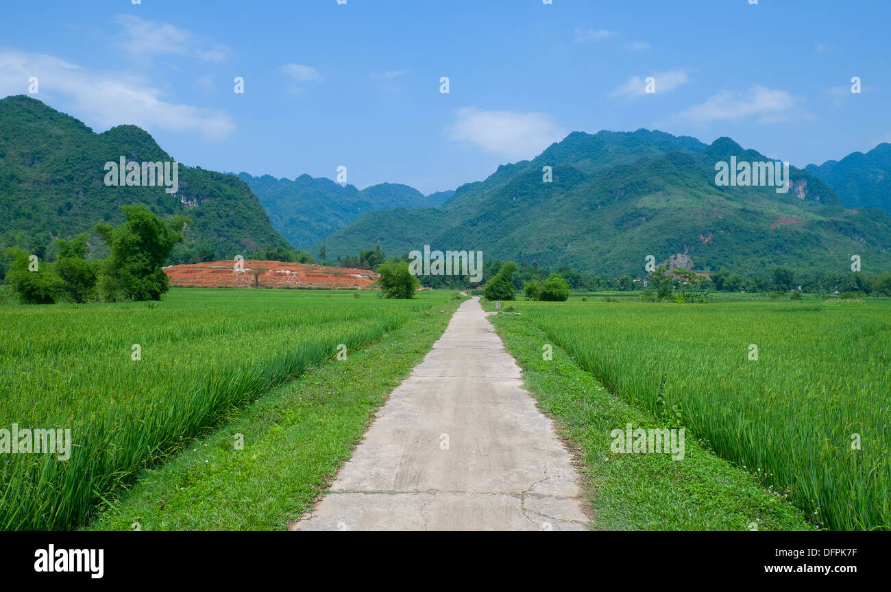 Empty country road in rice field, Vietnam, Southeast Asia - Stock Image