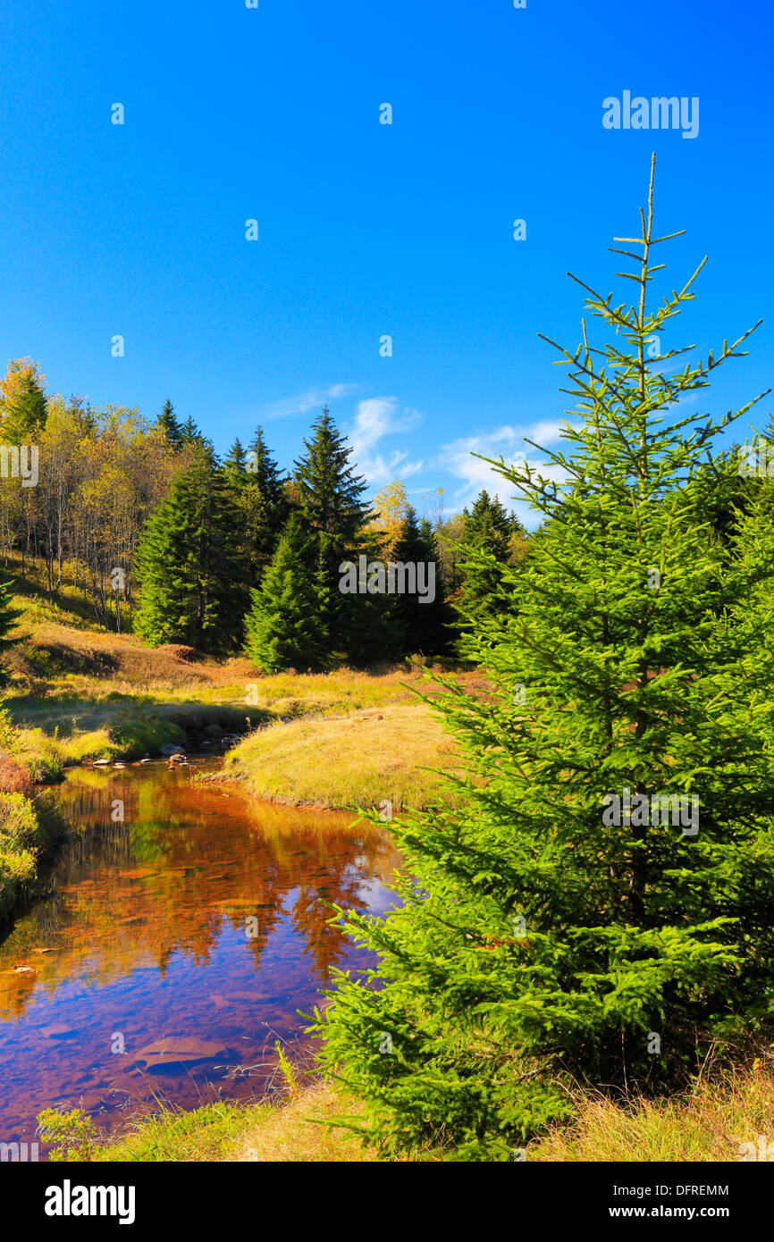Left Fork Red Creek, Blackbird Trail, Dolly Sods Wilderness, Hopeville, West Virginia, USA Stock Photo