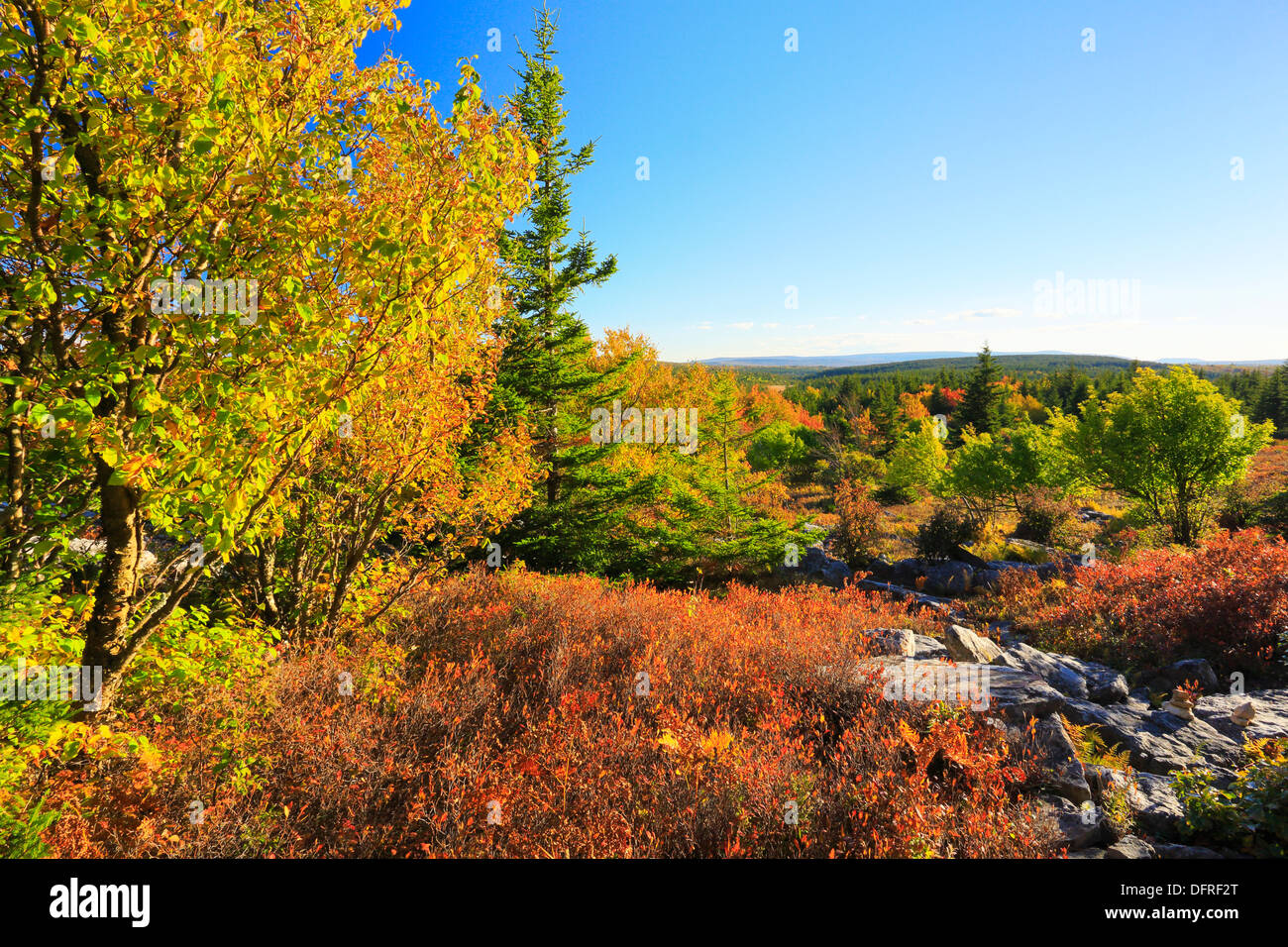 Blackbird Trail, Dolly Sods Wilderness, Hopeville, West Virginia, USA - Stock Image