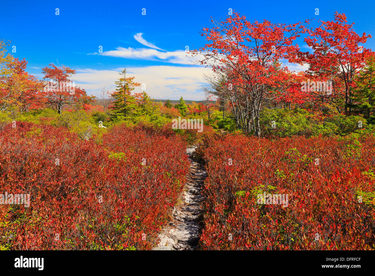 Harman Knob Trail, Dolly Sods Wilderness, Hopeville, West Virginia, USA - Stock Image