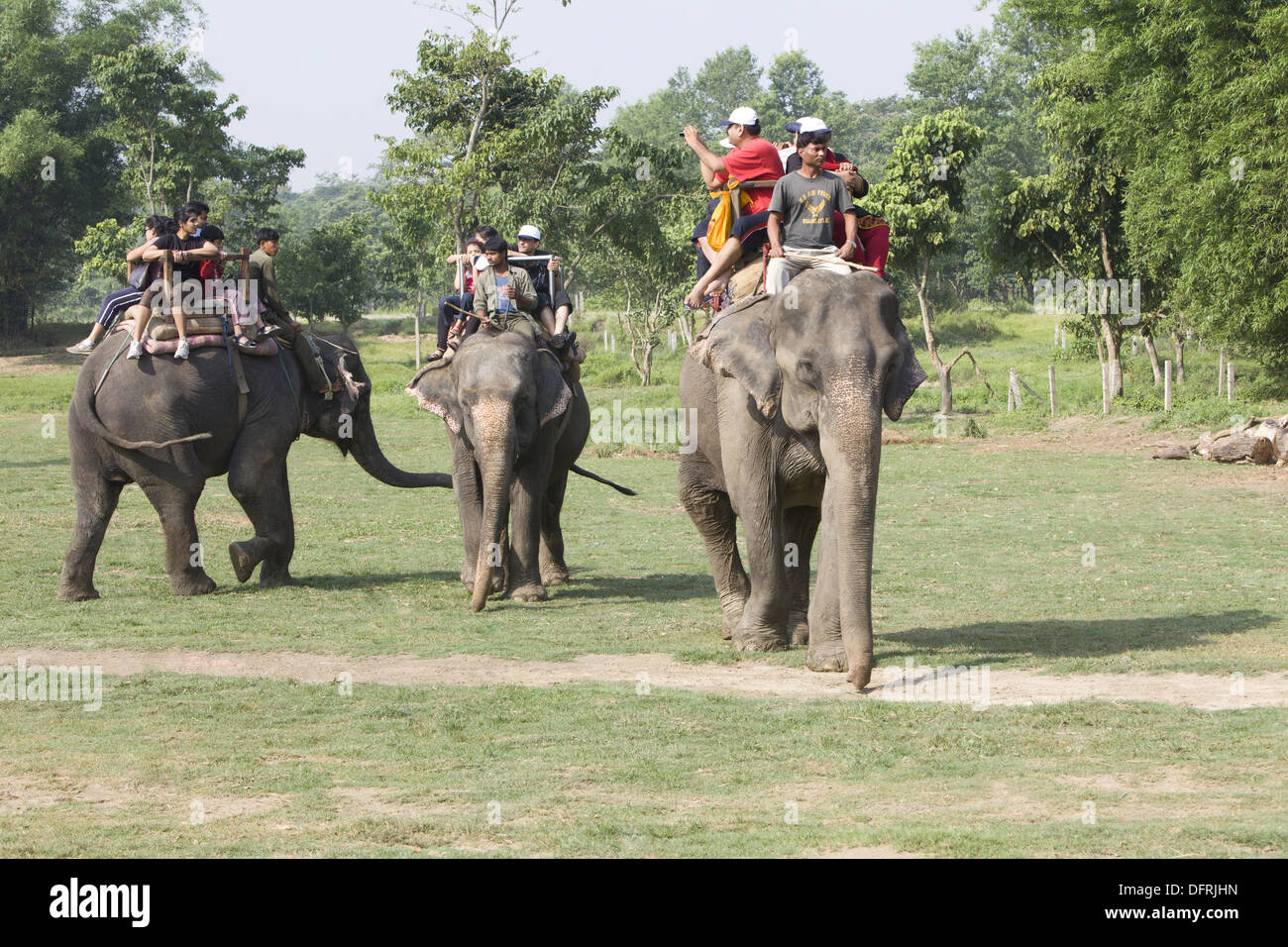 Tourists riding on elephant for elephant safari, Chitwan National